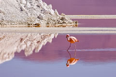 Watch pink flamingos in the Eduardo Avaroa National Park.