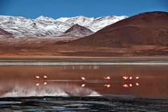 If you are lucky, you can take spectacular photos of the flamingos feeding in the Red Lagoon.