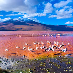 Thousands of pink flamingos flock to the Red lagoon to nest.