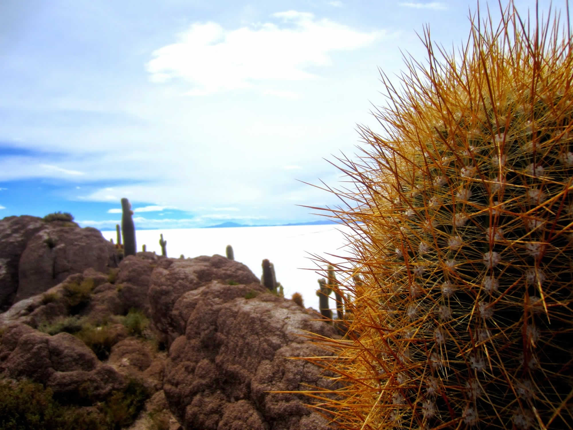 These cacti can grow several meters tall