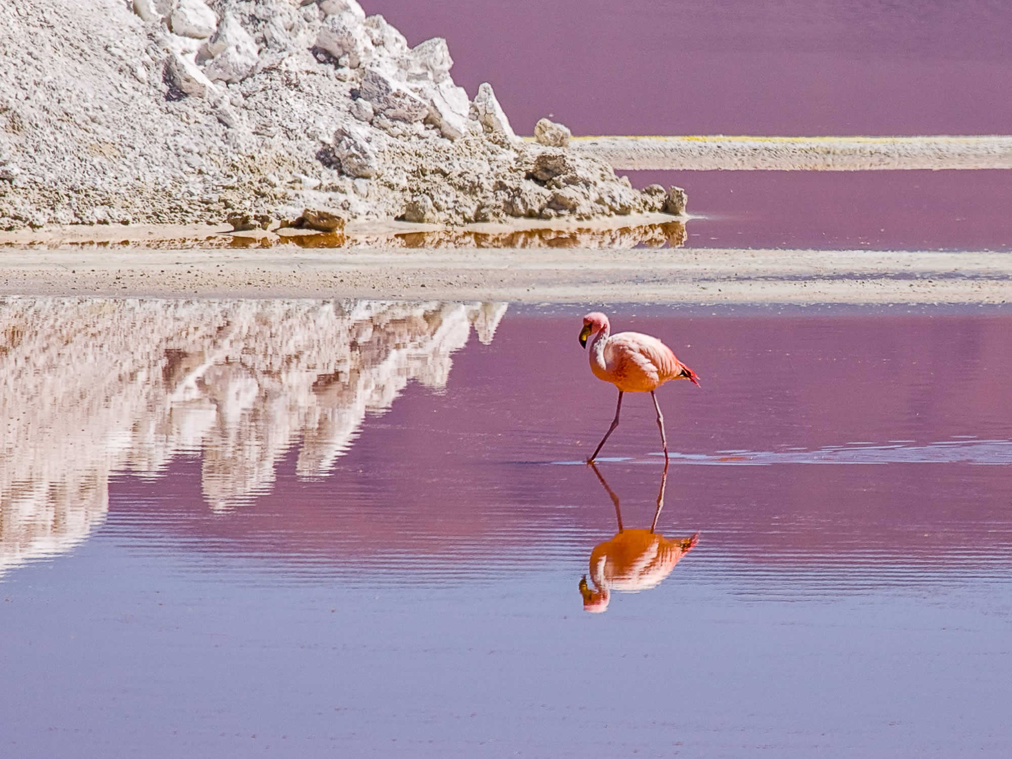 Pink flamingos in the Eduardo Avaroa National Park