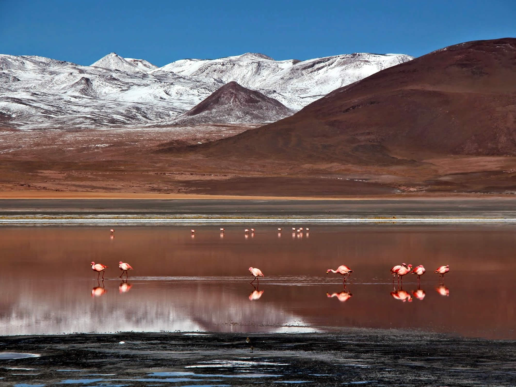 If you are lucky, you can take spectacular photos of the flamingos feeding in the Red Lagoon