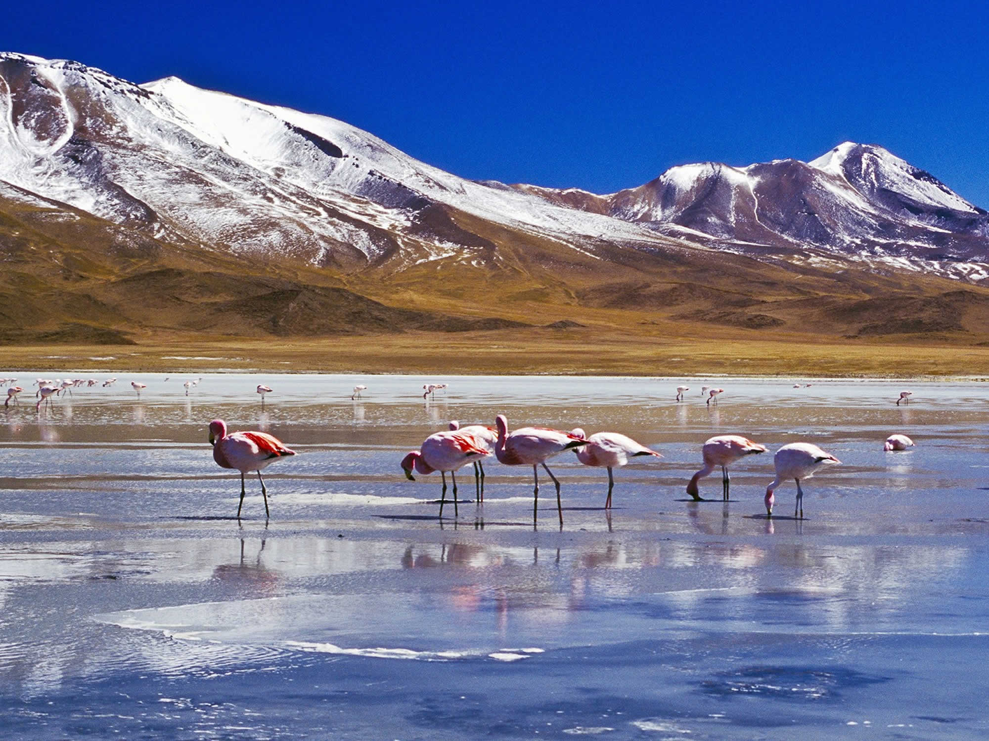 Flamingos stand in the water of the Red lagoon
