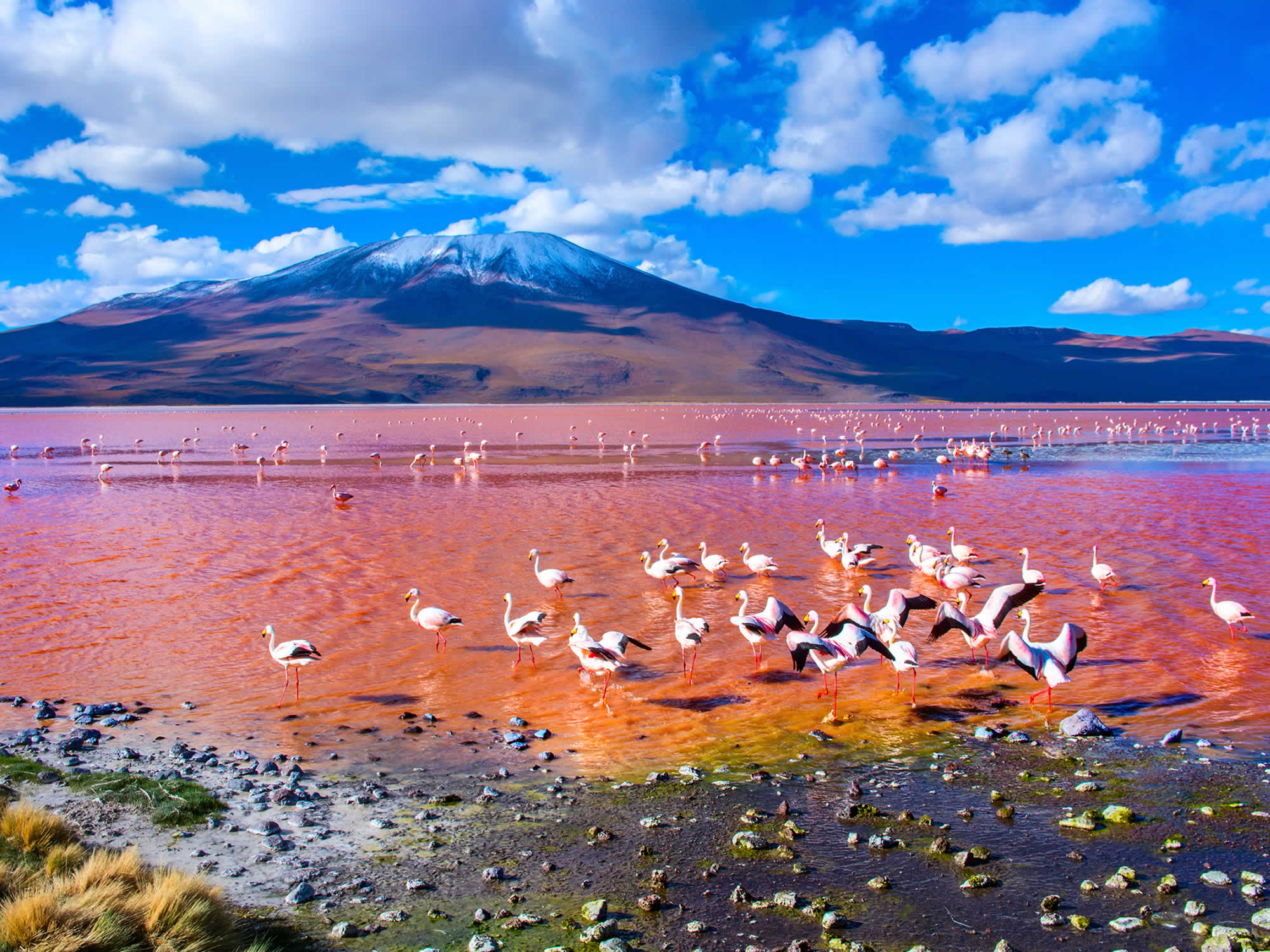 Thousands of pink flamingos at the Red Lagoon