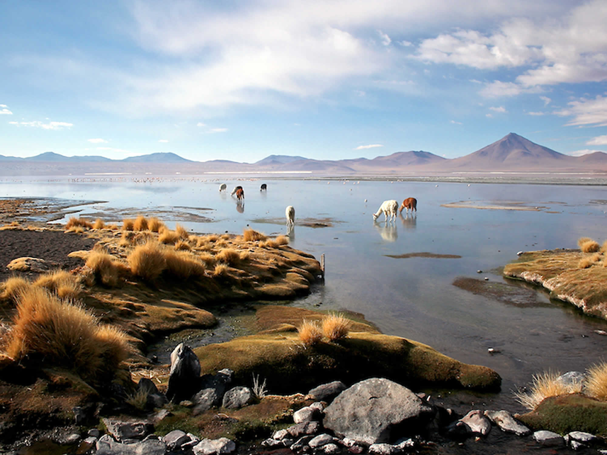 Scenic lagoons and andean wildlife.